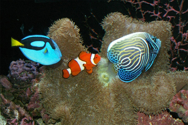 saltwater fish on sponge